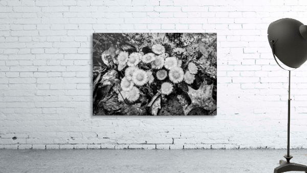 Flowers ap 2222 B&W