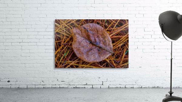 Leaf ap 1838