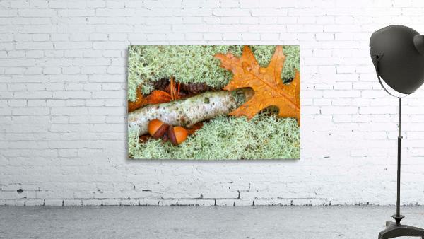 Pin Oak Leaf ap 1557
