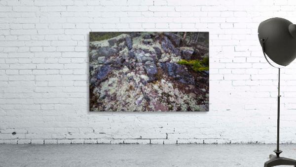 Purple Rocks ap 2289