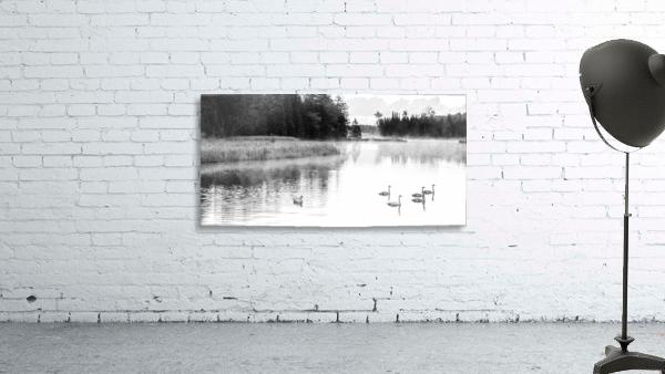 Swan Family ap 2694 B&W