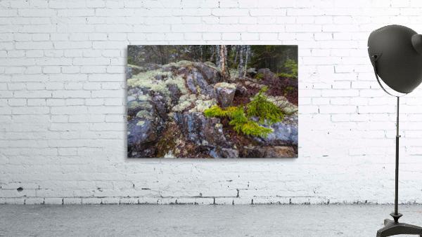 Moss   Lichen ap 2294