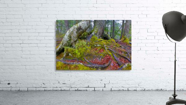 Moss   Lichen ap 2196