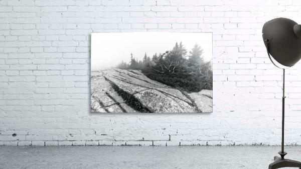 Lichen and Granite ap 2340 B&W