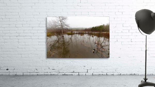 Beaver Pond ap 2357