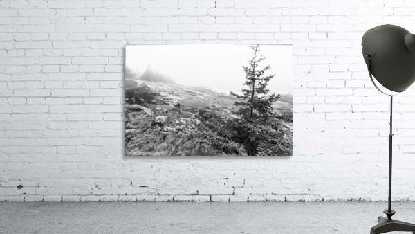 Lone Pine ap 2284 B&W