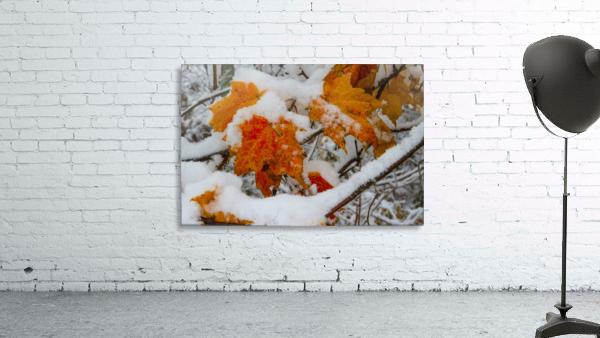 Early Snow ap 1571