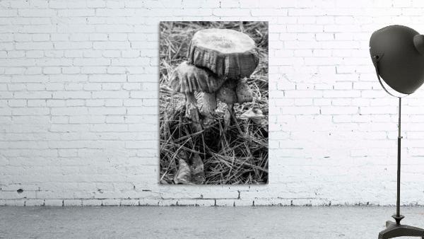 Mushrooms ap 1558 B&W