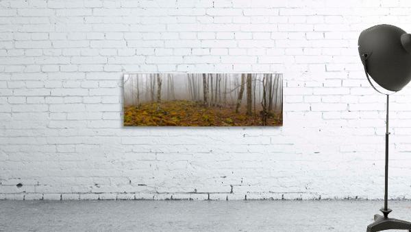 Mystic Forest apmi 1620