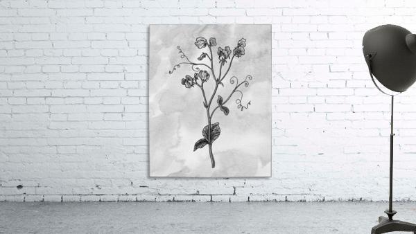 Sweet Pea Simple Gray Botanical Flower On Watercolor Marble