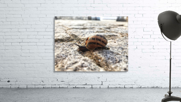 Little snail in the village of Portugal