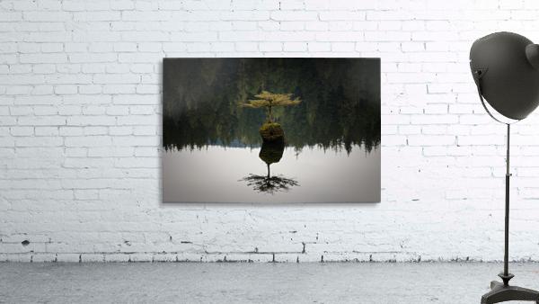 Reflection on a Bonsai Tree