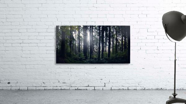 Spencer Butte Forest