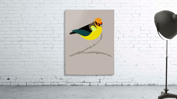 Black Eared Tanager
