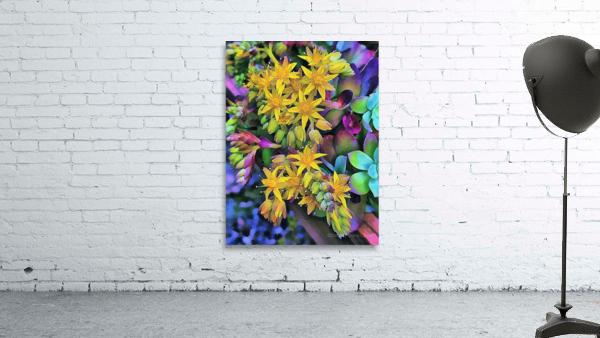 Echeveria Hybrid With Yellow Flowers