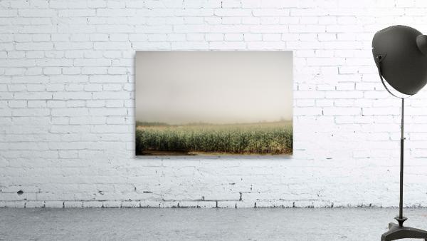 Summer Dust Cornfield