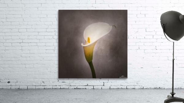 Graceful flower - Calla No. 4 | vintage style
