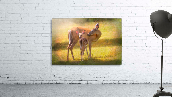 Doe with fawn looking back Print