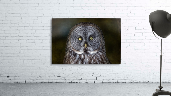 Stare Down with a Great Grey Owl Print