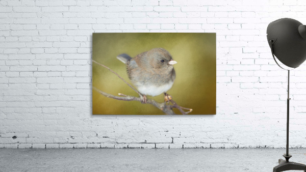 Dark Eyed Junco with Texture Print