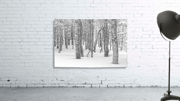 Pines at the Skyline Trail Print