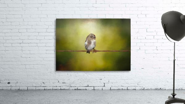 Redpoll on a Wire Print