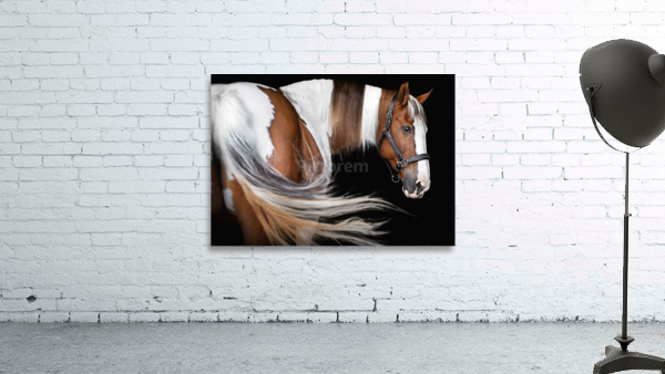 Paint Horse Portrait