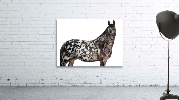 Spotted Horse Portrait