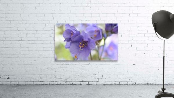 Blue Floral Photograph