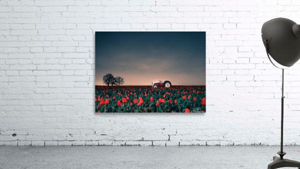 Tractors & Tulips