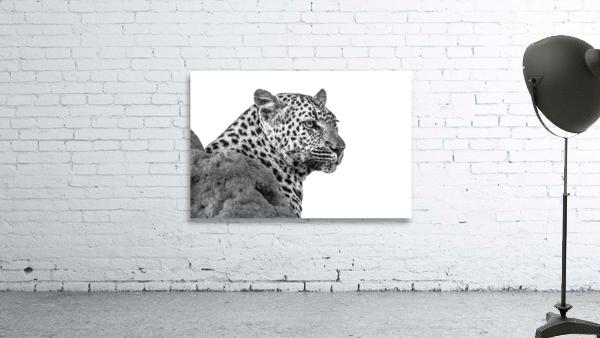 Leopard - B&W
