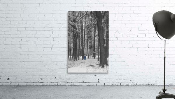 Blue Barrel in Woods