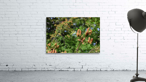 Spruce twig and background