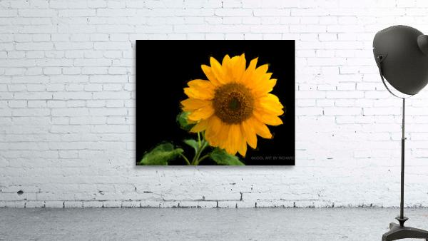 Solitary Sunflower