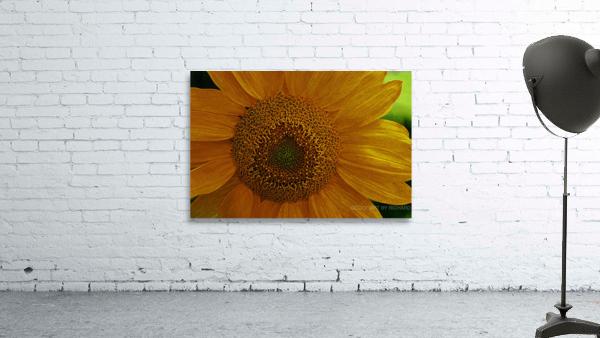 Enhanced Sunflower
