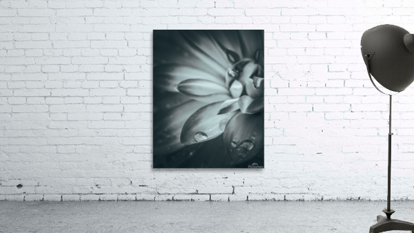Flowerful Study In A Monochromatic Vibe