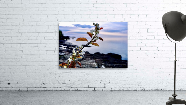 Flower on the Shoreline