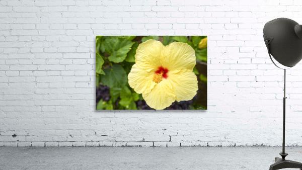 Yellow Hibiscus Tropical Flower Hawaii