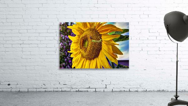 Sunflower Creative