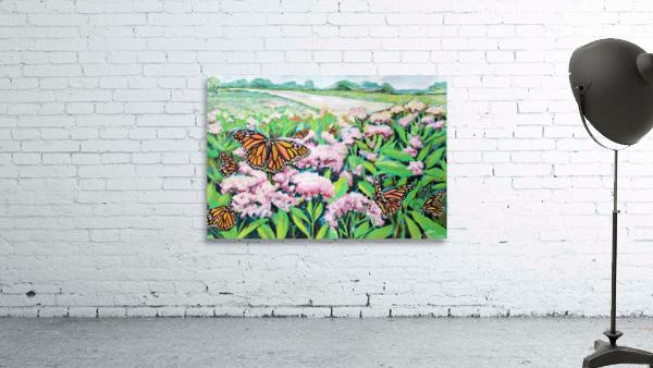 CountyMonrachButterflies