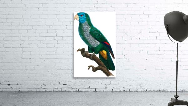 Yellow and Green Parrot Art Print Digital Download Vintage French Bird Illustration Printable Coastal Tropical Wall Art