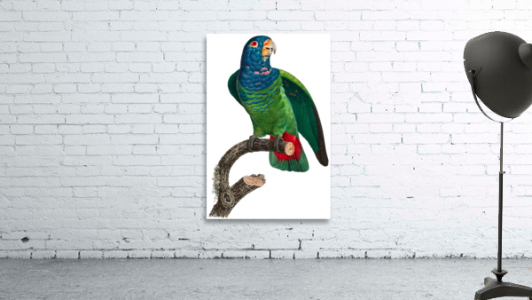 Parrot Print Antique Space Painting Vintage Drawing Poster Wall Art vintage animal parrot photo Tropical Parrot Art