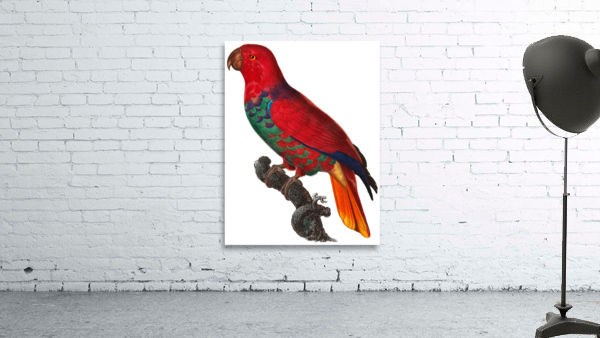 Parrot Print Antique Space Painting Vintage Drawing Poster Wall Art Eclectus Parrot Vintage parrot print Parrot Poster Print
