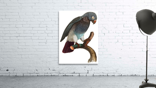 Macaw - Birds - Paradise - Tropical- Art Print - Wall Art - Parrot