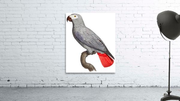 Parrot Print Art Poster with Parrot Parrot Wall Art for Bird Lovers