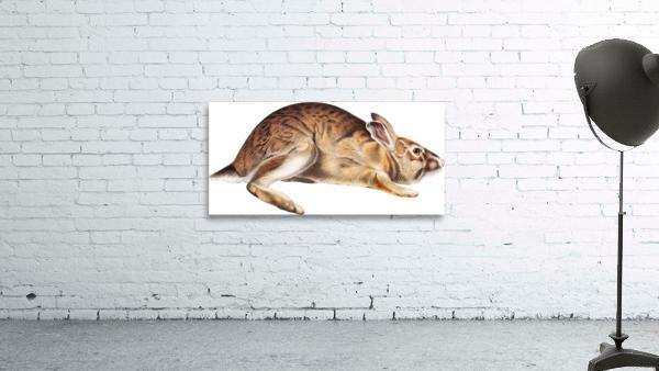 rabbit portrait   pet portrait   custom bunny portrait   custom dog portrait   animal lover gift   gift for her   gift for pet mom