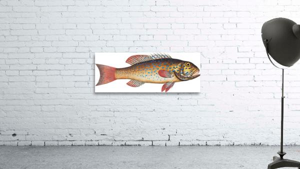 Vintage Fish Wall Art Prints