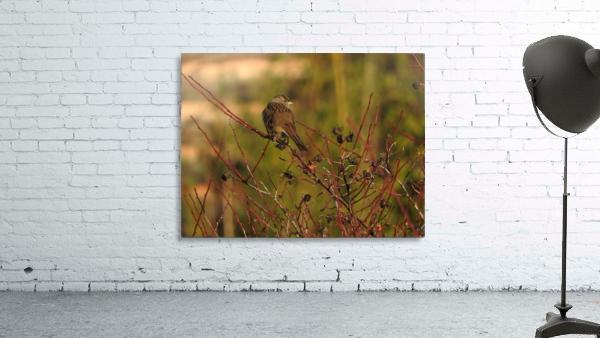 Sparrow on Wild Rose