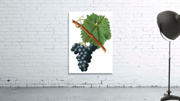 Grape Spanna Antique Art Kitchen Art Grapes Vintage Grapes Pic Grape Vine Grape Leaves Winery Spanna Grapes Wine Blued 02Element 3