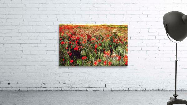 Hidden in the Poppy Fields